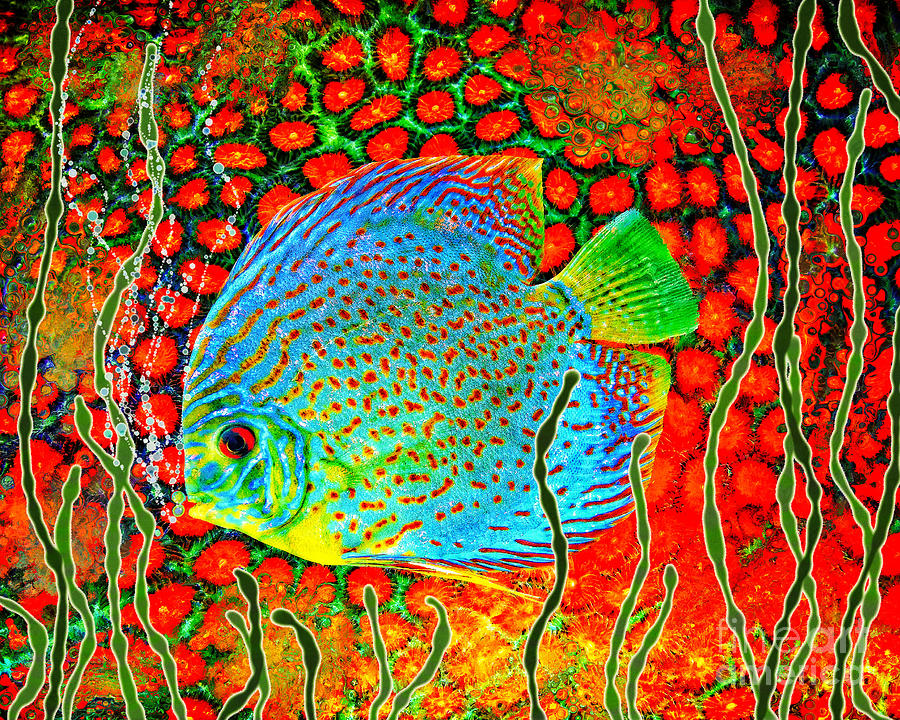 Discus Fish by Sandra Selle Rodriguez