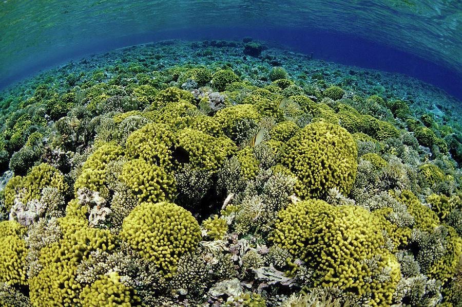 Reef Garden Photograph by Tammy616
