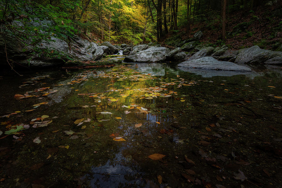 Reflecting on Autumn by Bill Wakeley