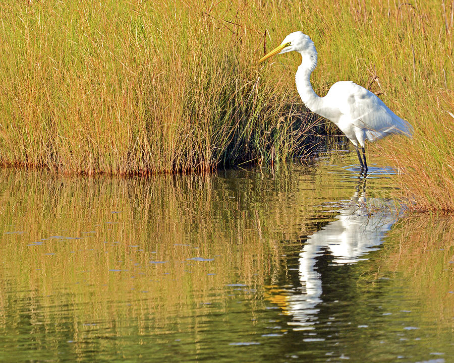 Egret in the Marsh by Dave Hilbert