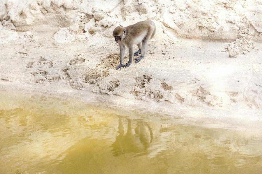 Monkey Photograph - Reflection by Laura J P Richardson