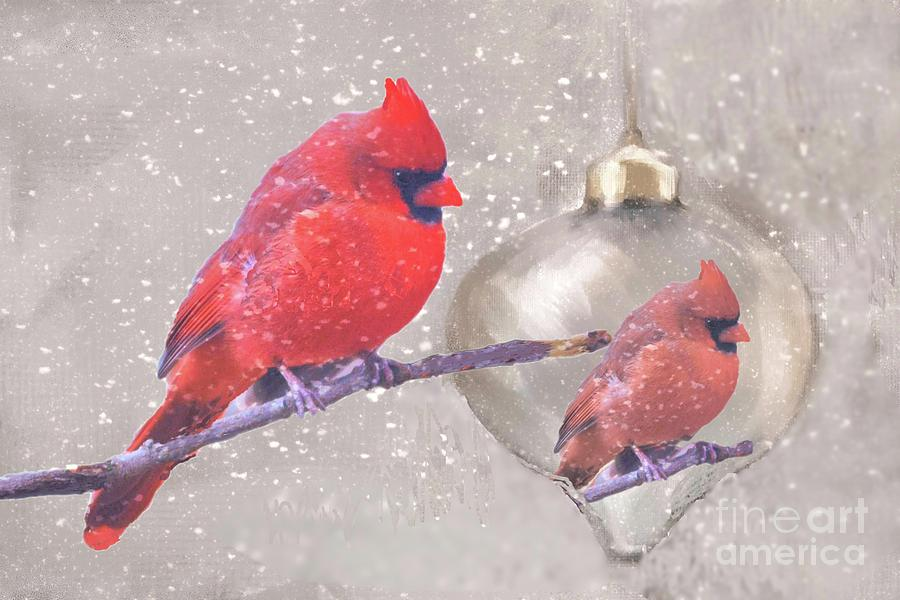 Reflection of a Cardinal by Janette Boyd
