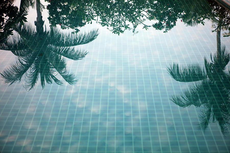 Reflection Of Palm Trees In A Swimming Photograph by Frank Rothe
