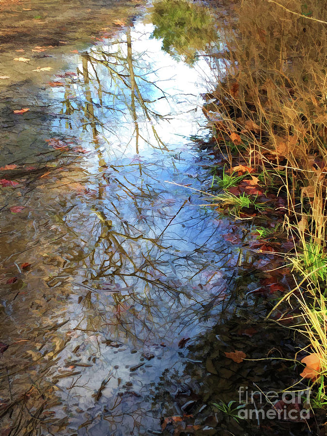 Reflections in a Puddle by Kerri Farley