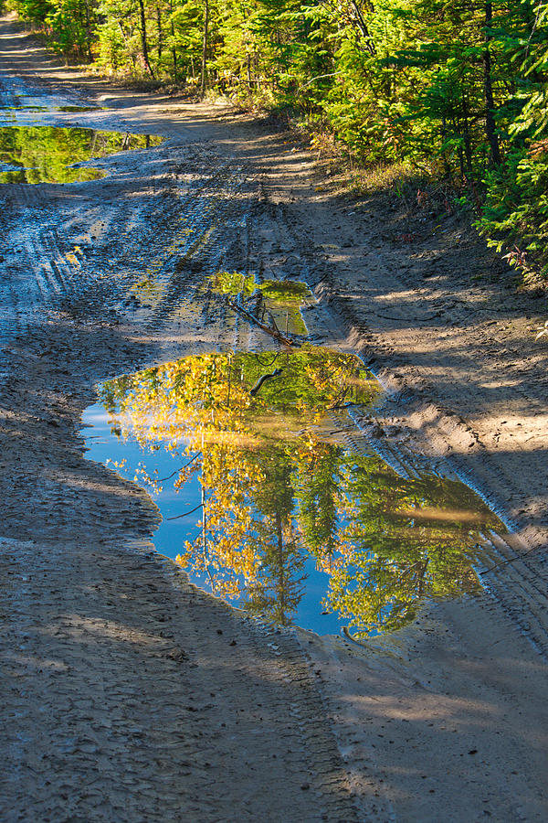 Fall Photograph - Reflections Of The Fall by Cathy Mahnke