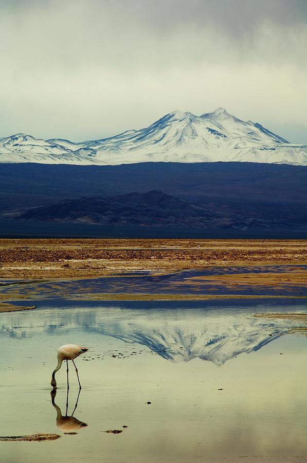 Reflections, Salar De Atacama, Chile Photograph by By Philippe Reichert