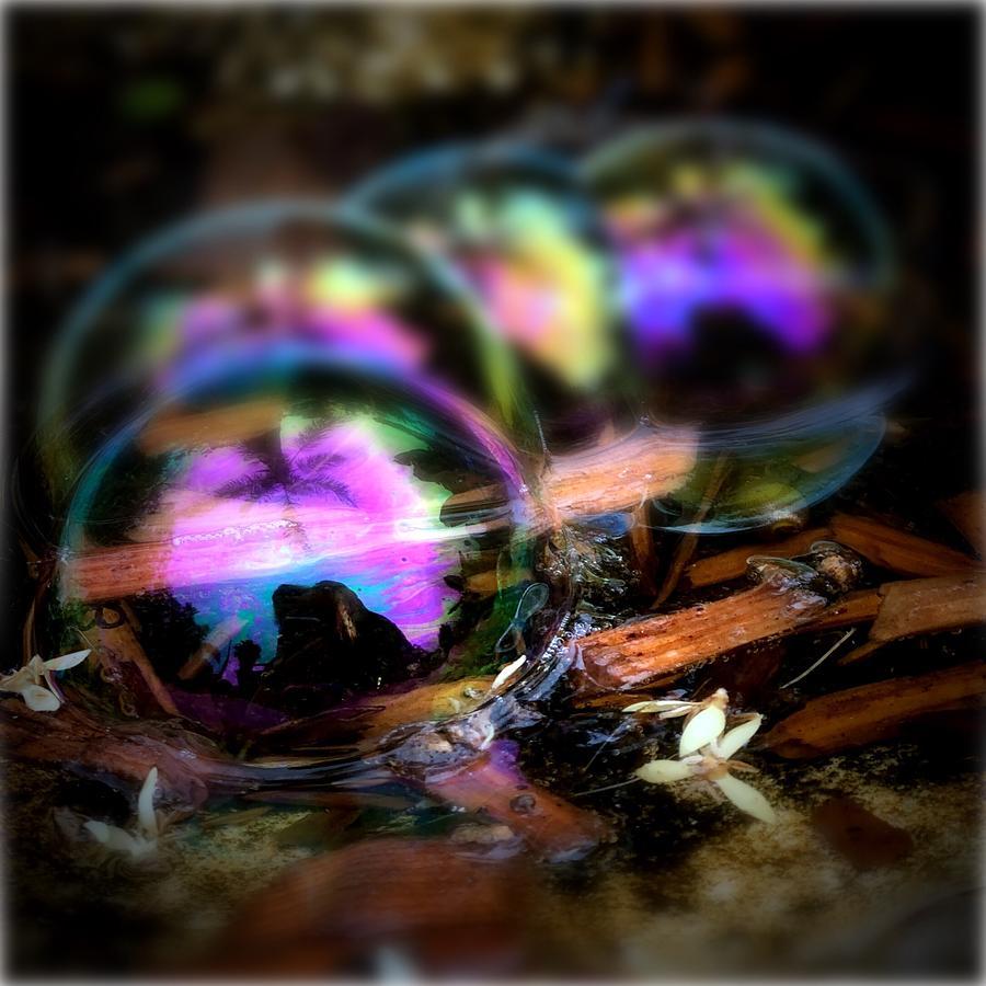 Reflective Fun Photograph
