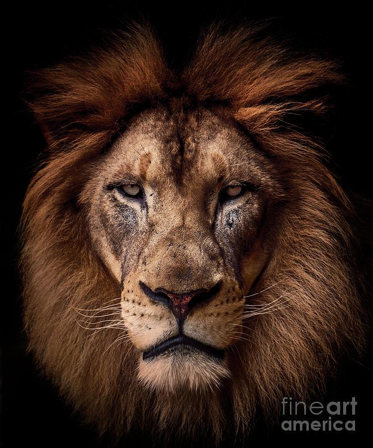 Regal Lion #2 by Julian Starks