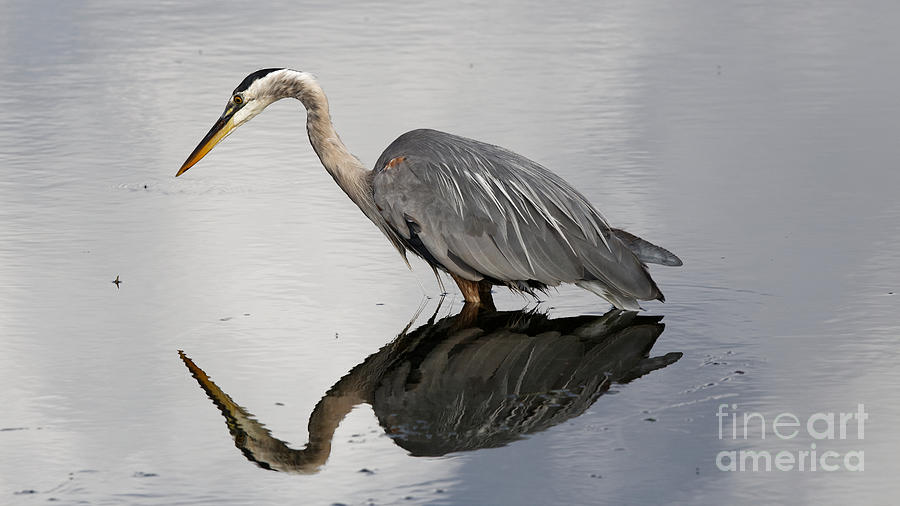 Reflection of the Heron by Sue Harper