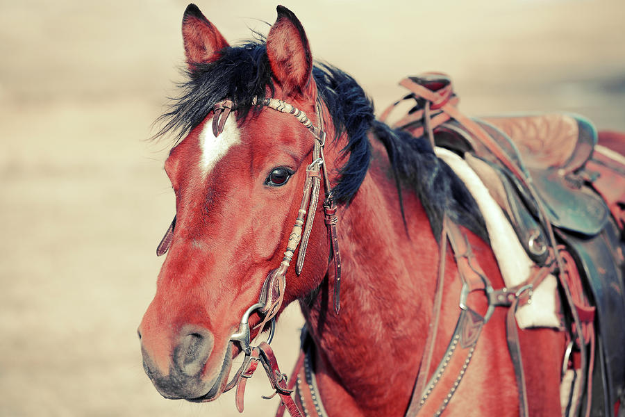 Horse Photograph - Reliable Red by Todd Klassy
