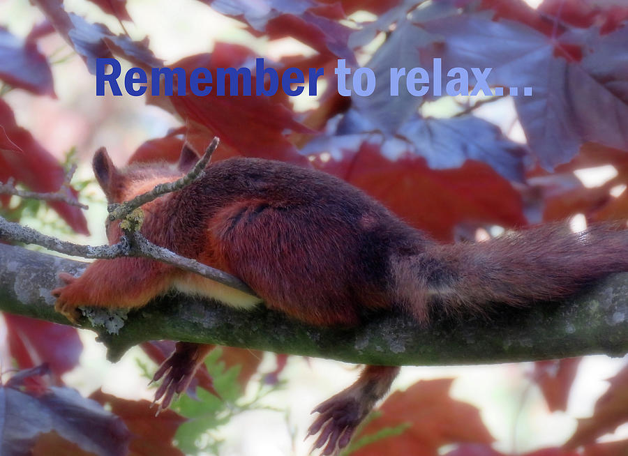 Remember To Relax Photograph