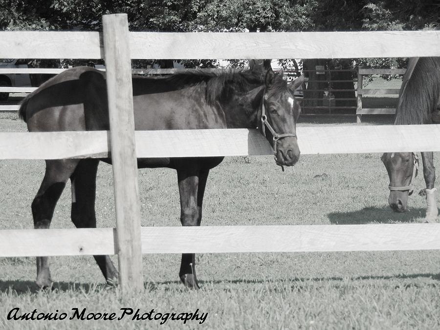 RESTING HORSE by Antonio Moore