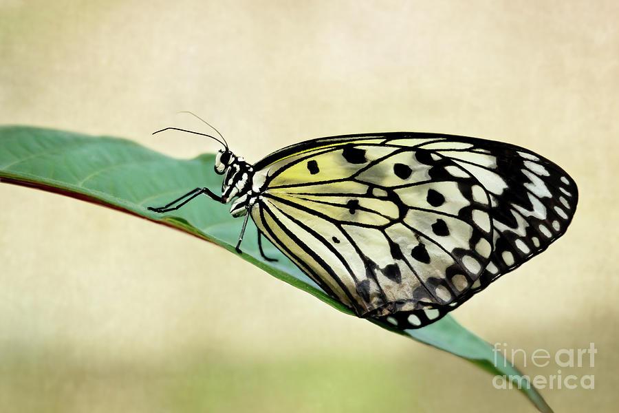 Resting on a Leaf by Sabrina L Ryan