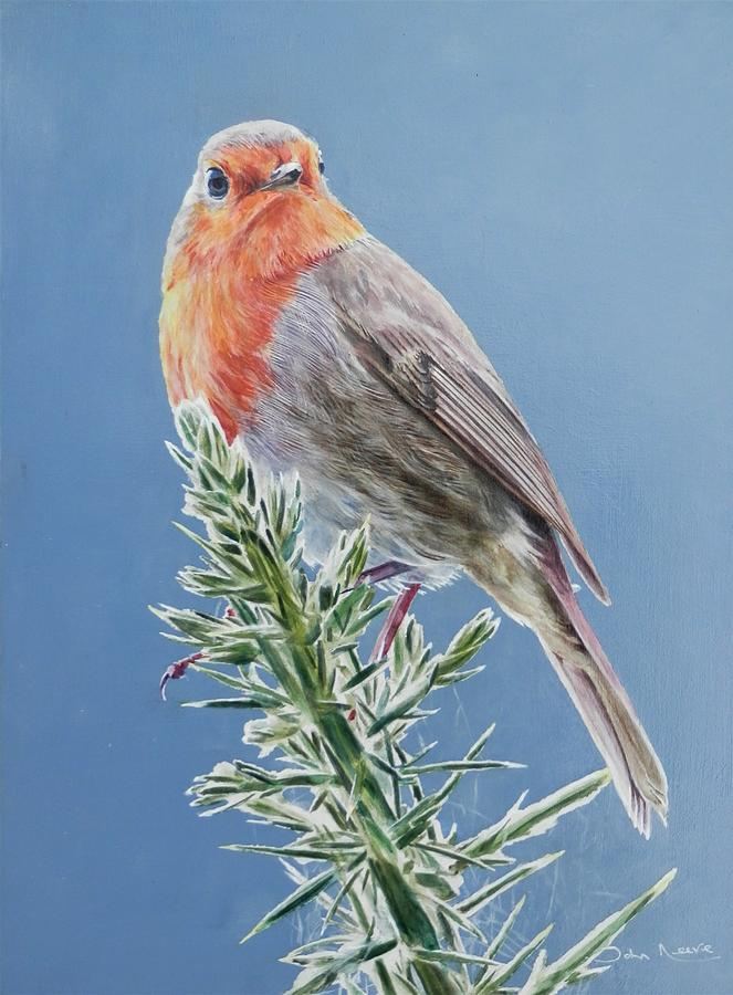 Robin on Thorns by John Neeve