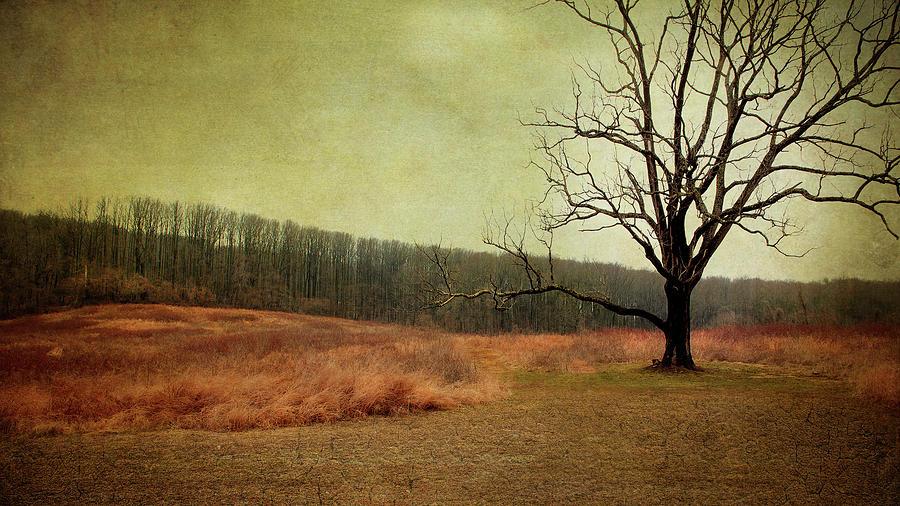 Resting Sycamore Tree by Reynaldo Williams
