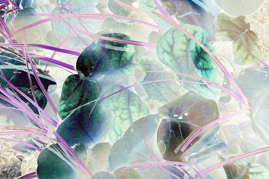 Reverie by John Hintz