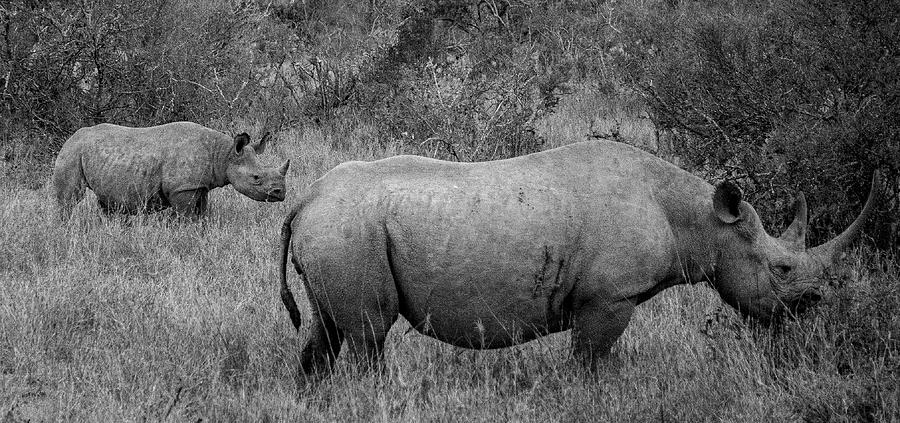 Rhino and Child by Philip Rispin