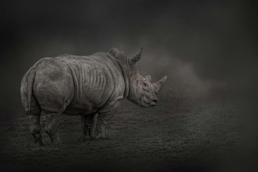 Rhino Land by Kelley Parker
