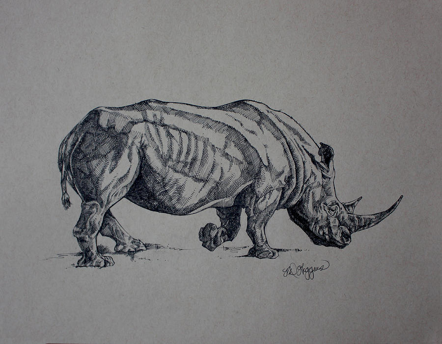 Rhino Sketch by Derrick Higgins