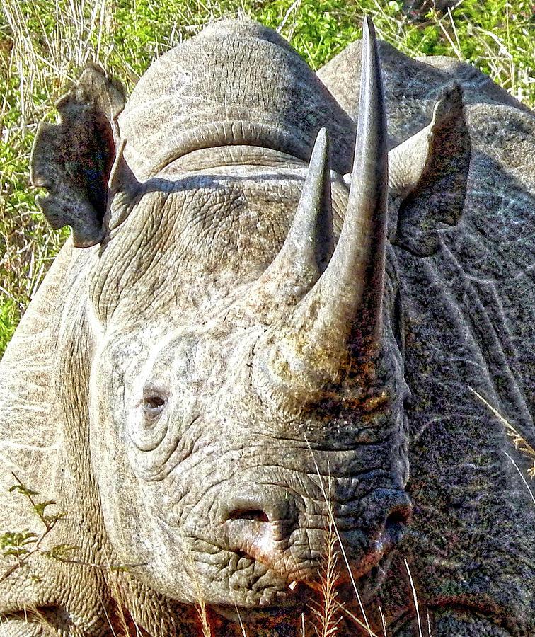 Rhino Photograph - Rhino Zen by Patrick Murphy