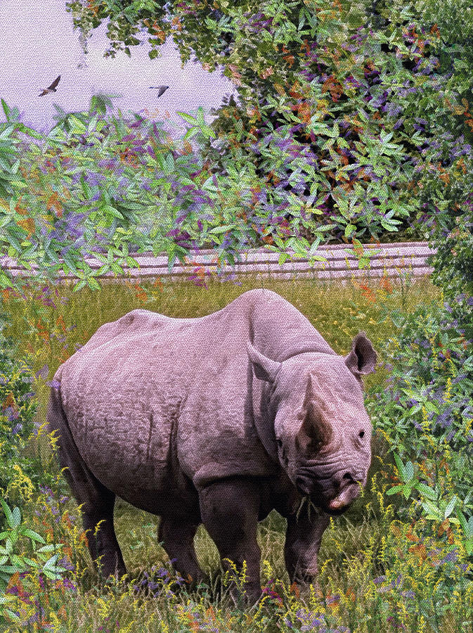 Rhinoceros by Natalie Holland
