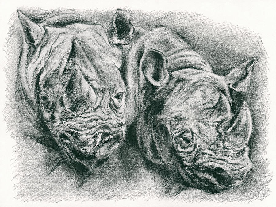Rhinoceros Study by MM Anderson