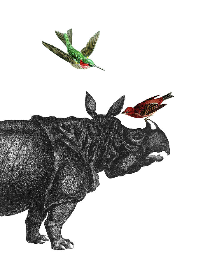 RHINOCEROS ART PRINT POSTER Animals Rhino Horn Drawing Decor Illustration
