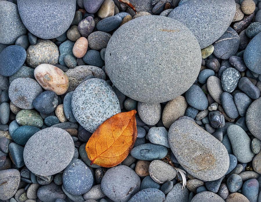 Rialto Beach Pebbles by Carolyn Derstine