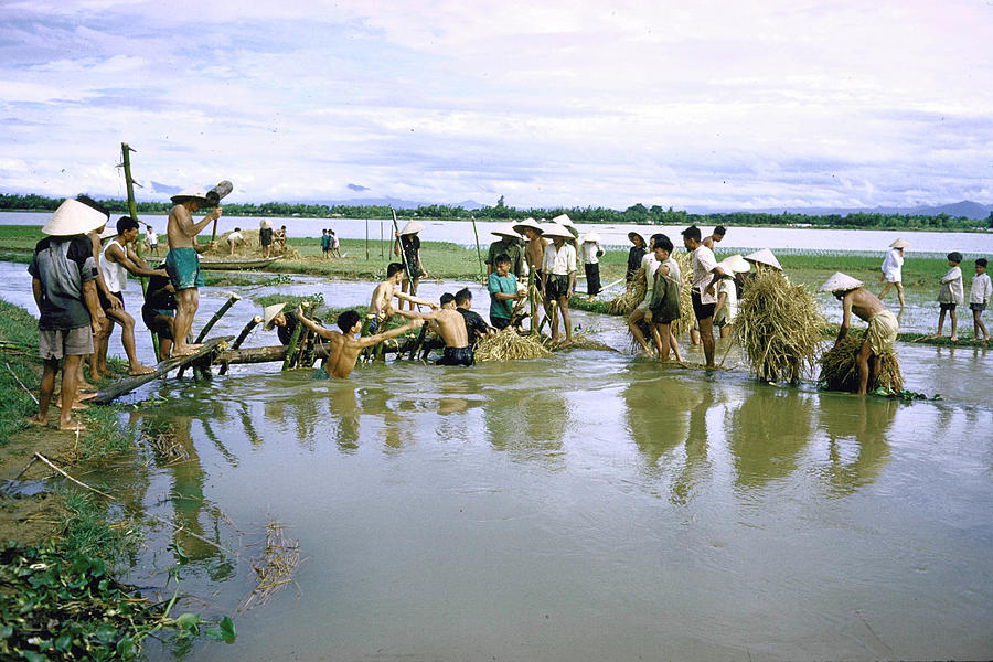Rice Farmers Struggling To Build Dam To Photograph by John Dominis