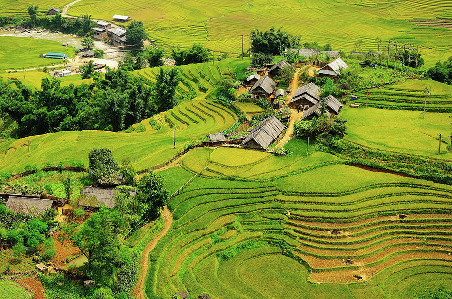Rice Field Terraces Photograph by Nutexzles