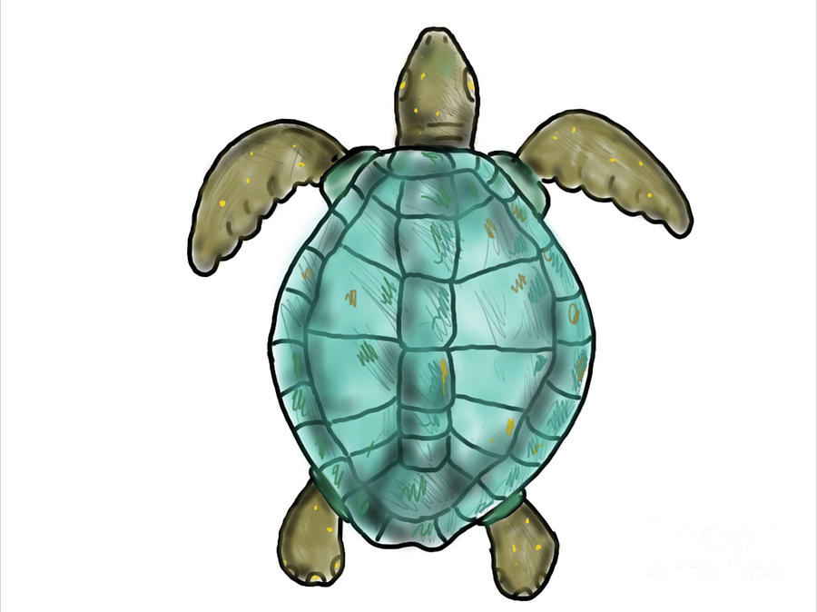 Ridley Sea Turtle Swimming Color Drawing Digital Art By Aloysius
