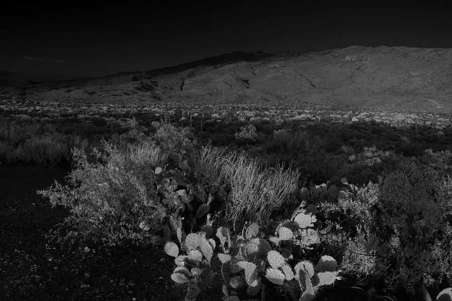 Rincon Mountains in Black and White  by Chance Kafka