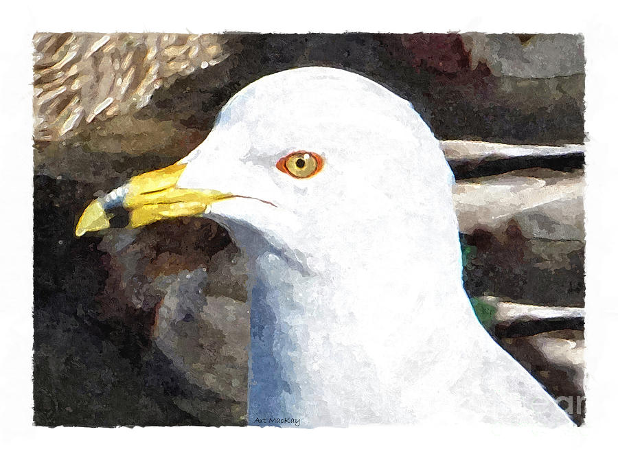 Ringbilled Gull Portrait by Art MacKay