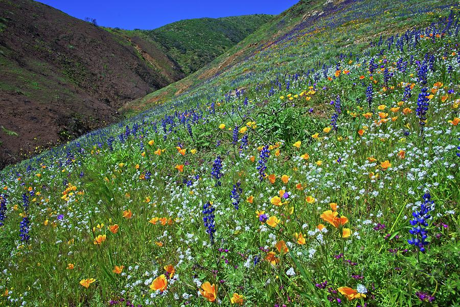 Rising From the Ashes - Superbloom 2019 by Lynn Bauer