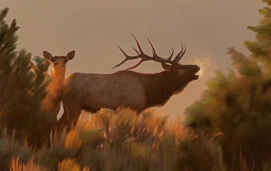 Rites of Fall- Bugling Elk by Mark Miller