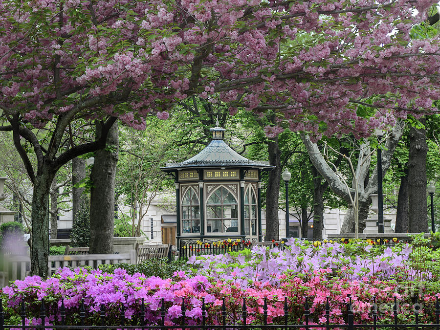 Rittenhouse Photograph - Rittenhouse In Spring by Stacey Granger