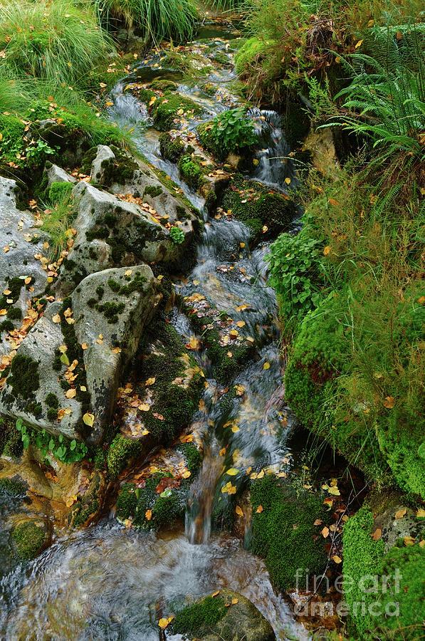 Mountain Photograph - River And Autumn Colors In Serra Da Gardunha by Angelo DeVal