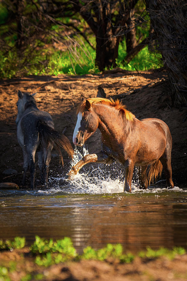River Dance Photograph by RJ Stein Photography
