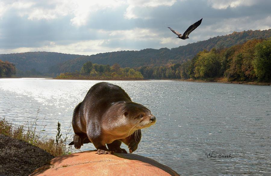River Otter by Chris Busch