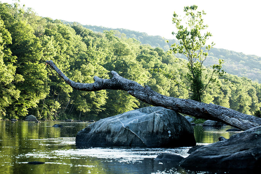 River Tree by JimO Ogilvie