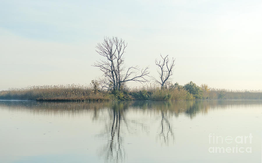 Delta Photograph - River With Tree Reflected In The Delta by Vadim Petrakov