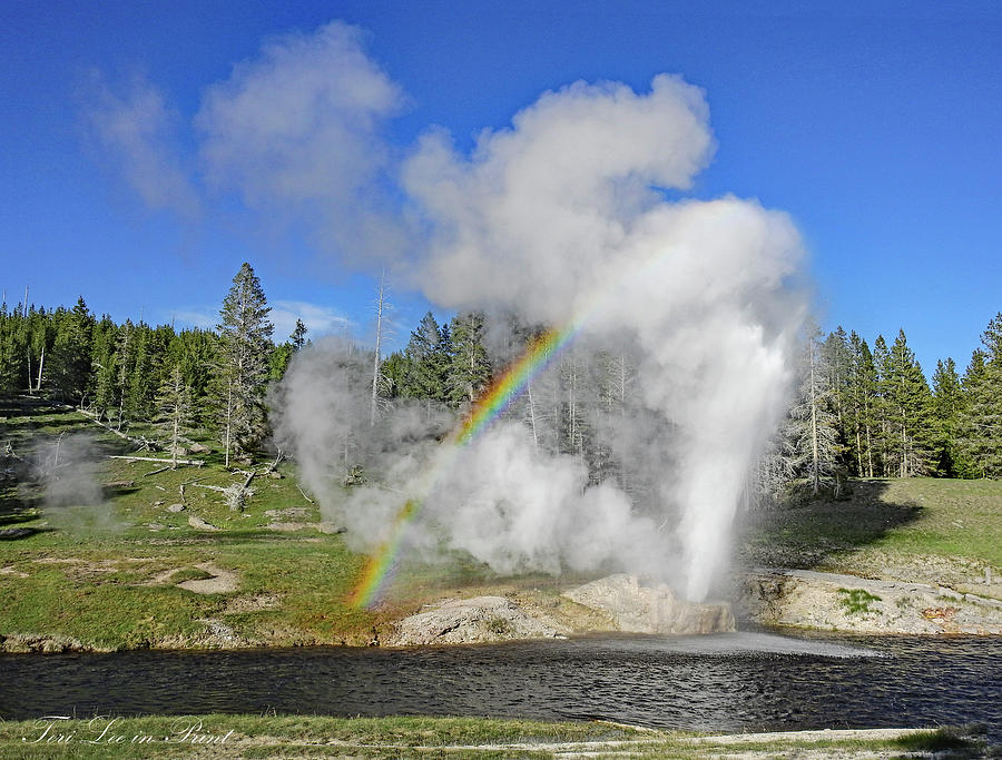 Riverside Geyser by Teri Lee