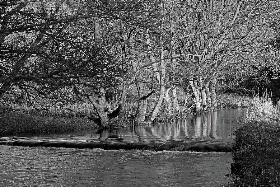 Riverside Trees - Wolfscote Dale by Rod Johnson