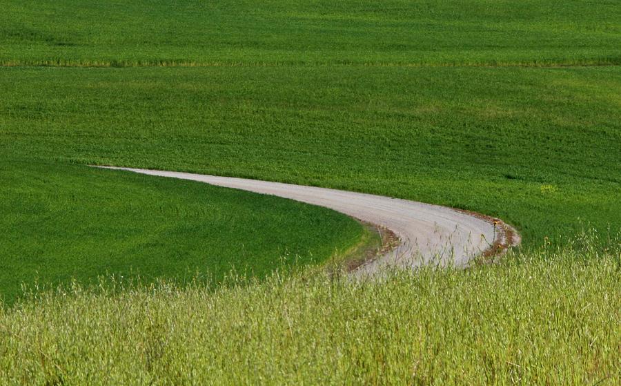 Road Into Dunnigan Hills Photograph
