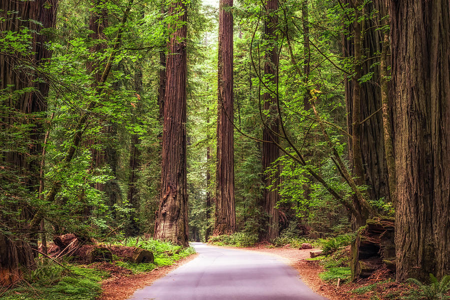 Forest Photograph - Road Through The Woods by Joseph S Giacalone
