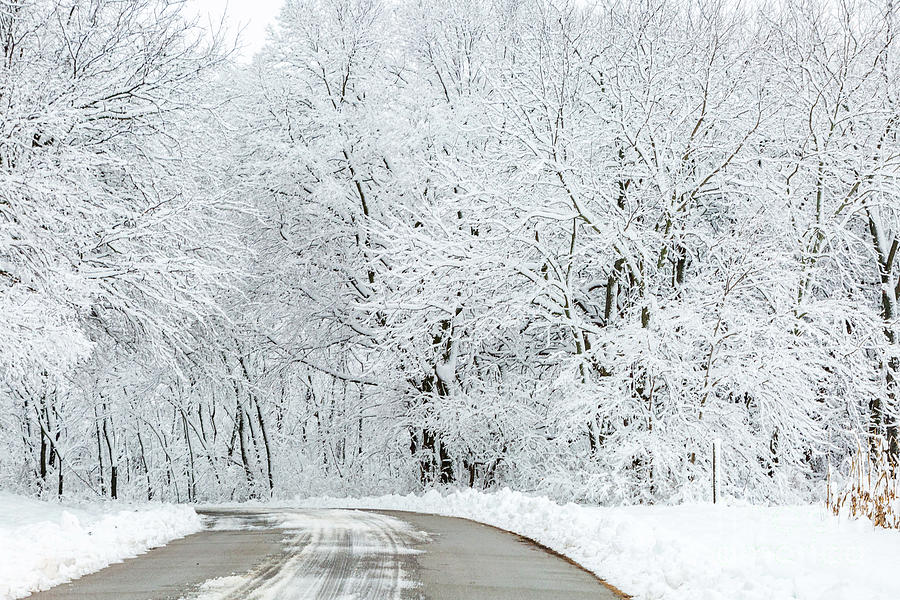 Road Through Winter by Terri Morris