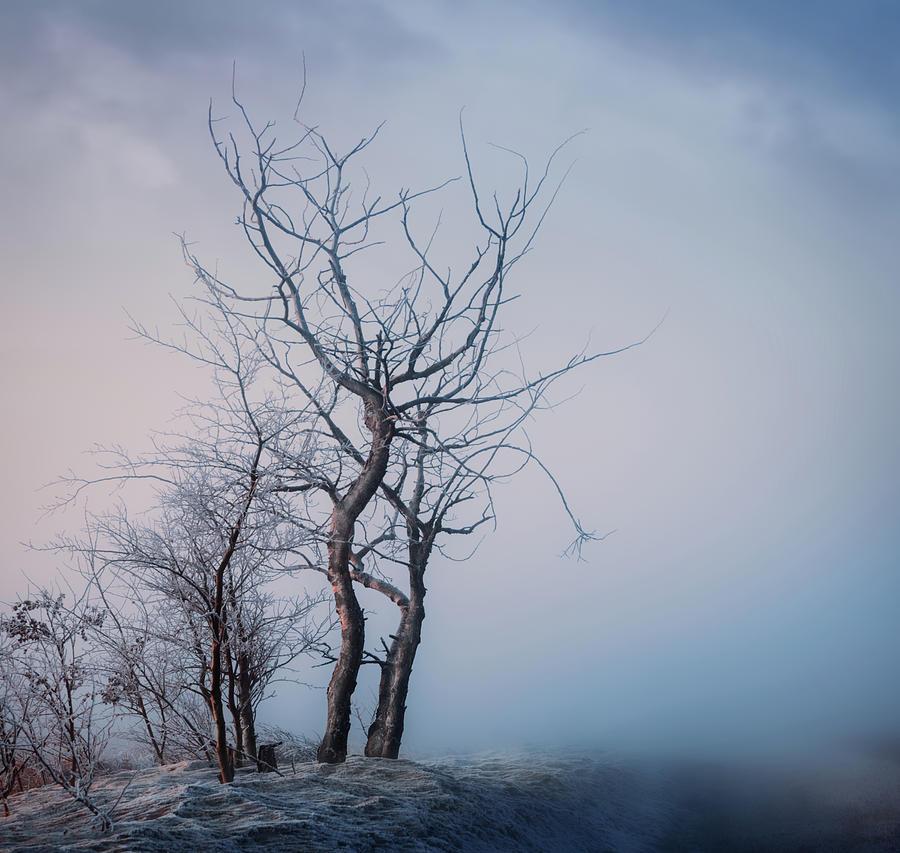 Roadside Trees by Dan Jurak