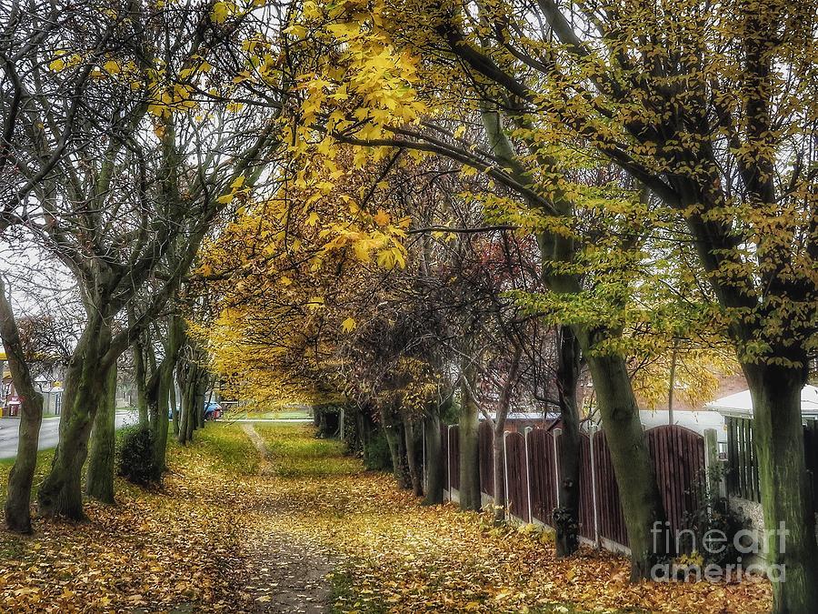 Roadside Walk by Mandi Hibberd