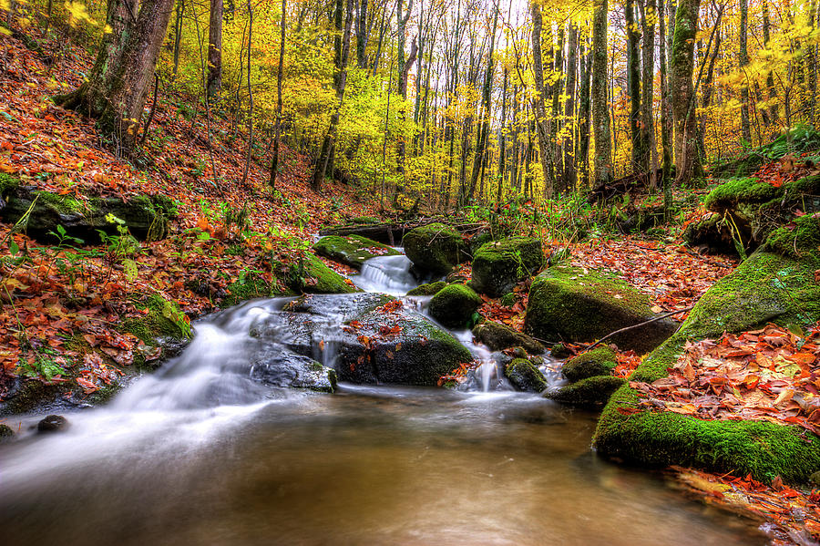 Roan Mountain Stream In Fall By Malcolm Macgregor