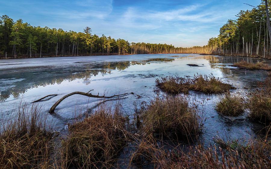 Fall Photograph - Roberts Branch Pine Lands by Louis Dallara